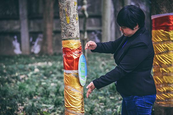 校园植树节